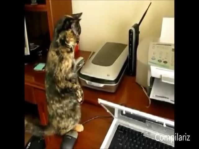 The Best of Cats vs Printers