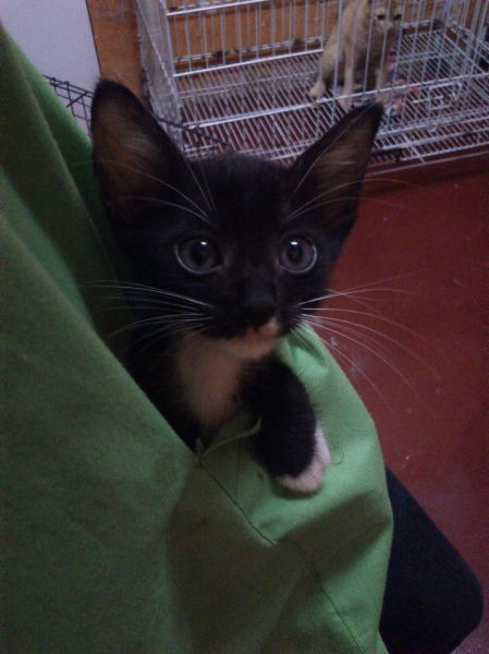 cat in my pocket