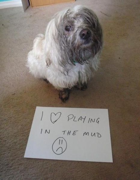 Funny Things All Dog Owners Will Relate To
