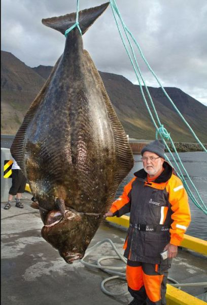 A Few Fishermen's Biggest Catches Ever