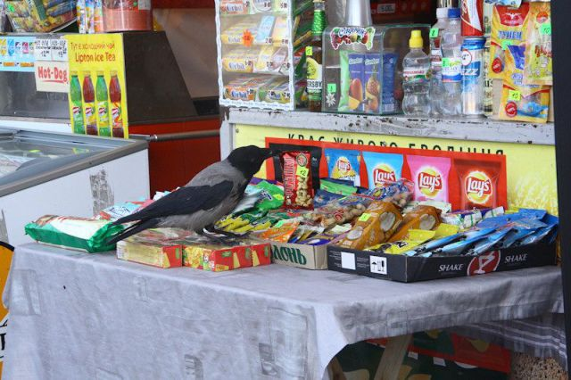 Where Ukrainian Crows Get Their Food