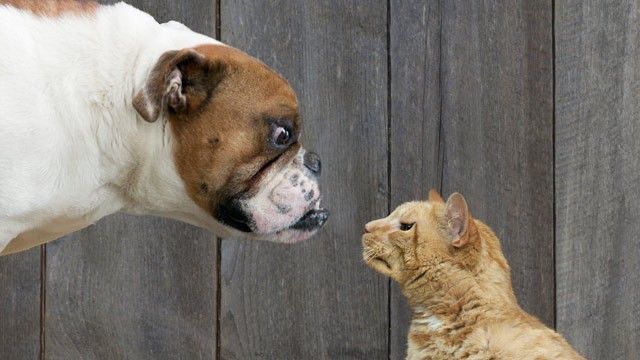 A Comparison between Dogs and Cats…