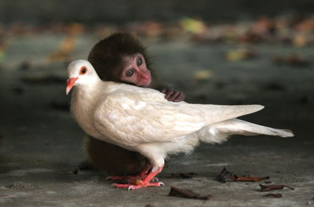 Strange and Improbably Animal Friendships!