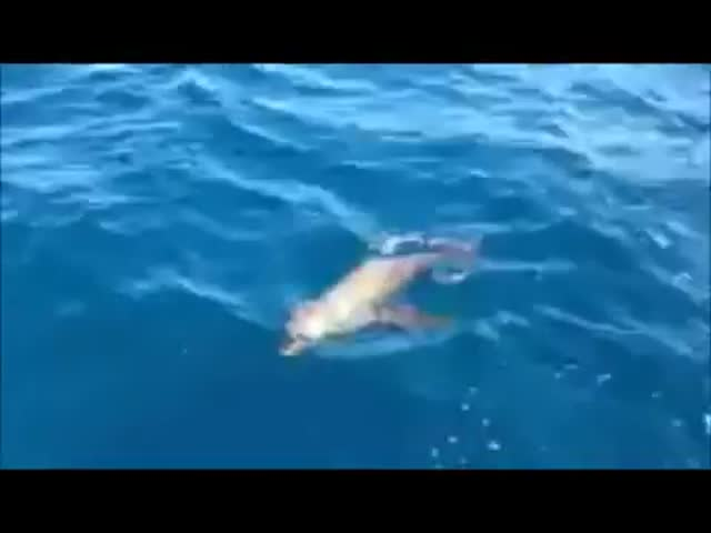 Incredible Encounter with a Baby Sea Lion Getting on a Boat…