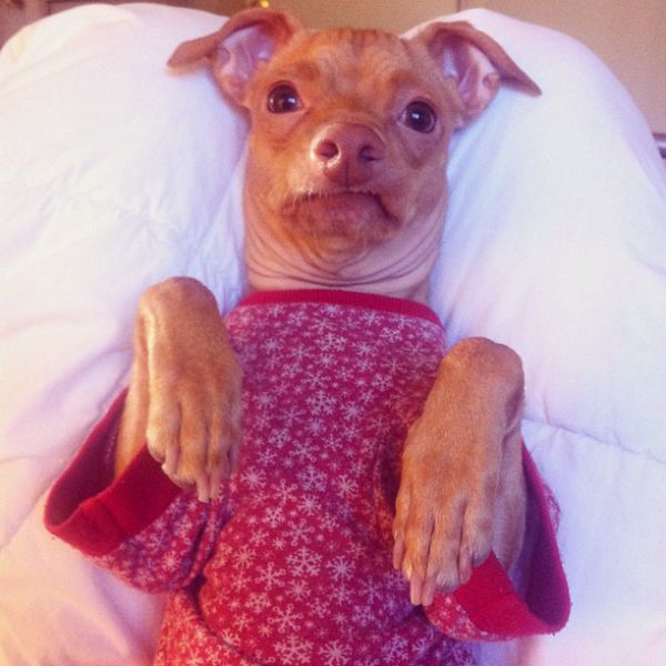 """The Most Adorable """"Ugly"""" Dog Ever"""