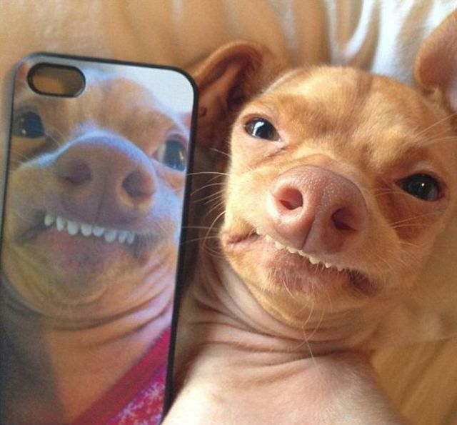 "Ugly Birthday Cat: The Most Adorable €�Ugly"" Dog Ever (23 Pics)"