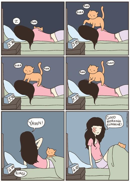 Things Every Cat Owner Will Relate To