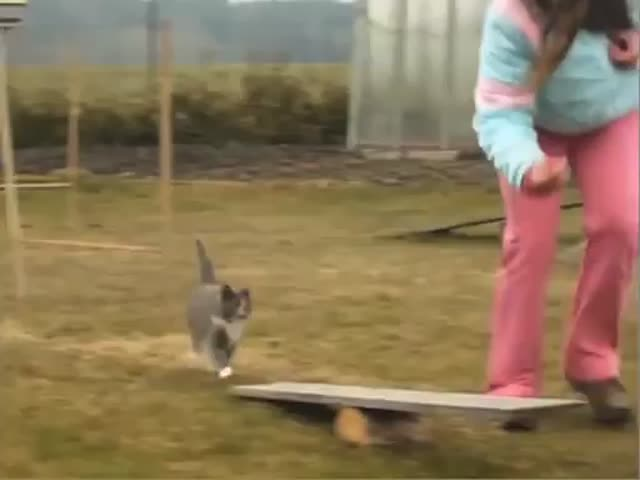 Proof You Can Also Train Cats to Do Amazing Tricks!