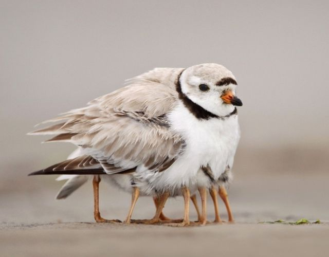 Unusual Animal Pictures That Will Make You Look Again