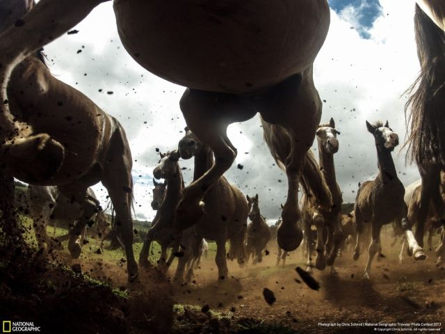 Some of the Top Entries from the National Geographic Wildlife Photo Contest
