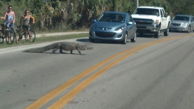 Things You Can Only Expect to See in Florida