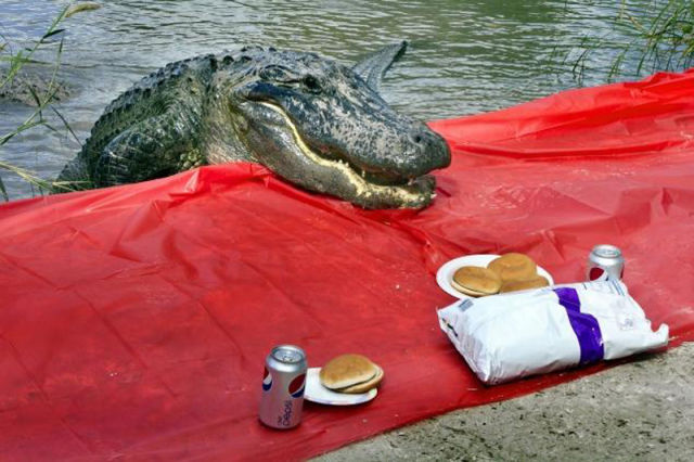 An Uninvited Picnic Guest