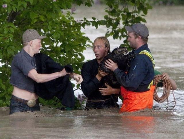 A Heroic Cat Rescuer in Canada