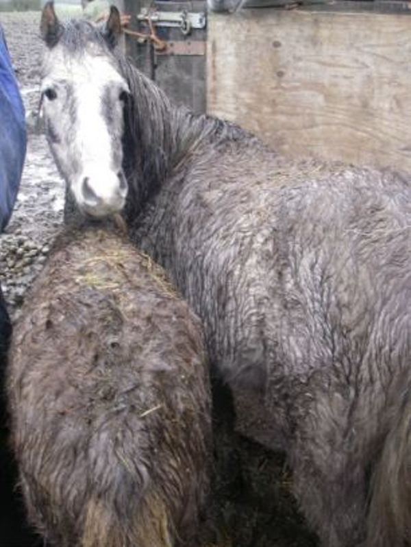 Female Farmer Charged with Animal Cruelty