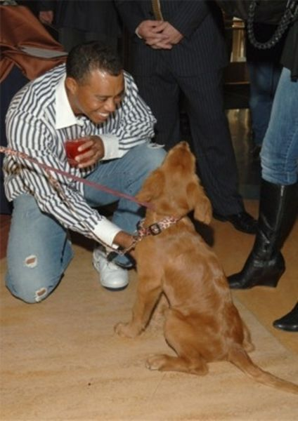 Facts That Will Teach You a Little More about Man's Best Friend