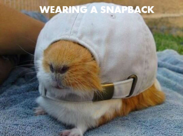 There Is Nothing This Guinea Pig Can't Do…