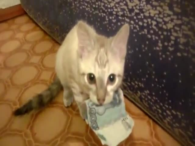 Cat Thief Has a Thing for Cash