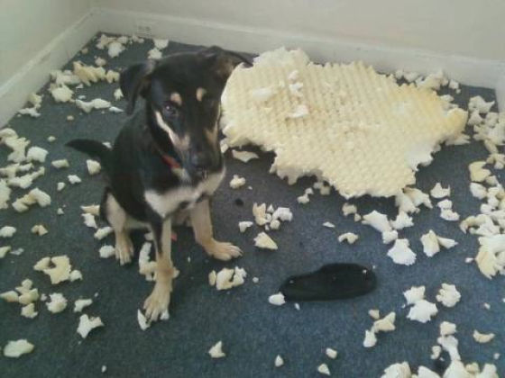 Puppy made a mess!