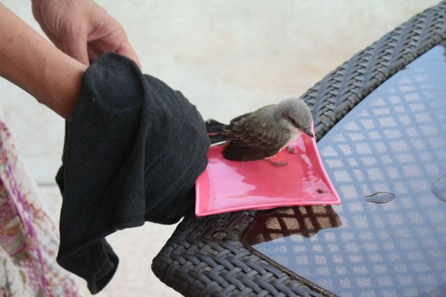 Baby Bird Is Rescued by the Kindness of Man