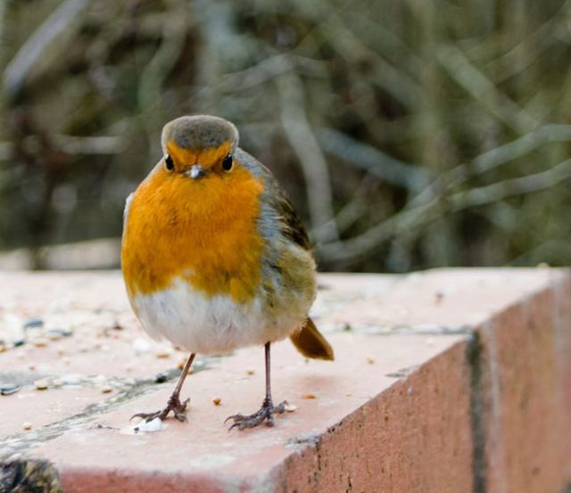 "A Few Real-Life ""Angry Birds"""