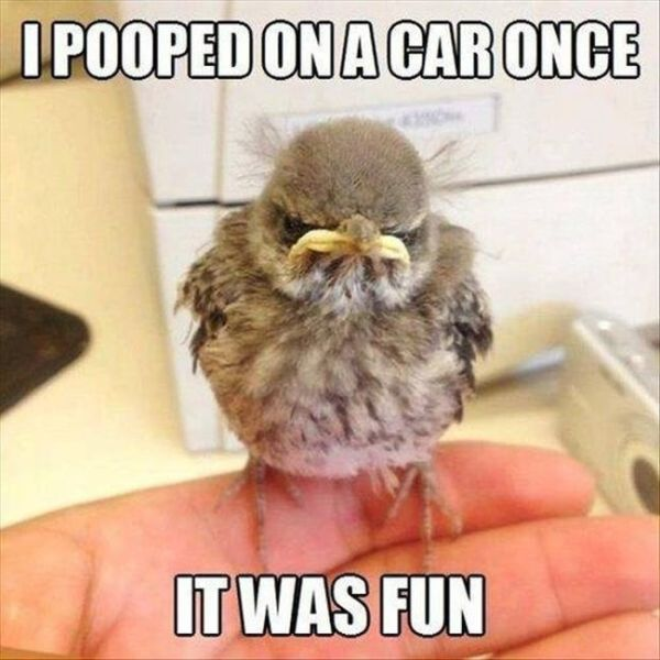 """A Few Real-Life """"Angry Birds"""""""