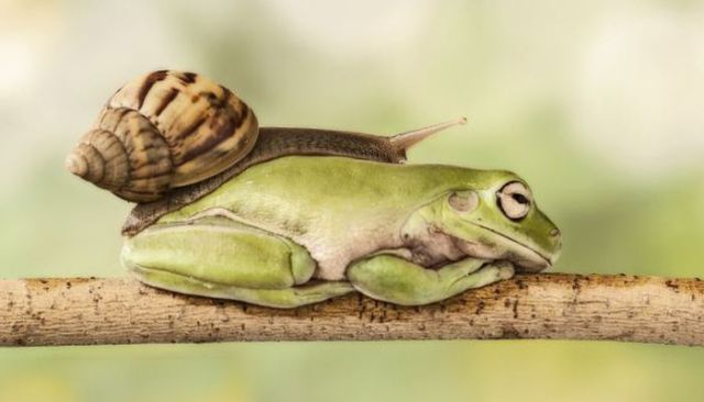 An Interesting Moment between a Snail and a Frog