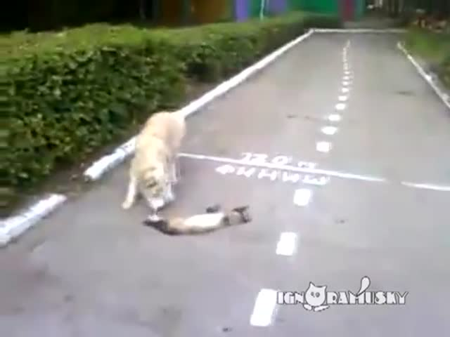Is That Cat Dead or Alive?
