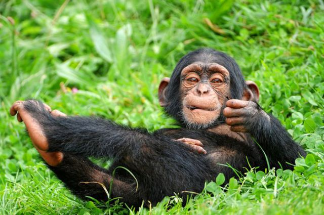 Simple Facts about Animals That Will Make You Smarter