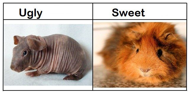 Ugly vs. Sweet
