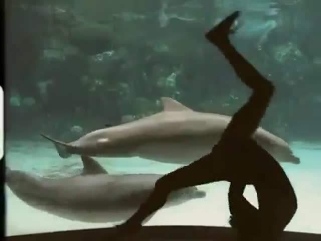 Dolphin Gets a Gymnastic Show from Aquarium Visitor