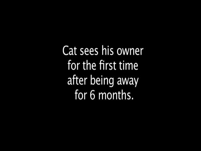 How a Cat Greets His Owner after 6 Months Apart