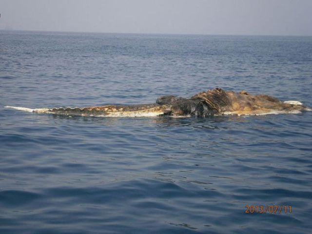 Bizarre Creature found Floating at Sea