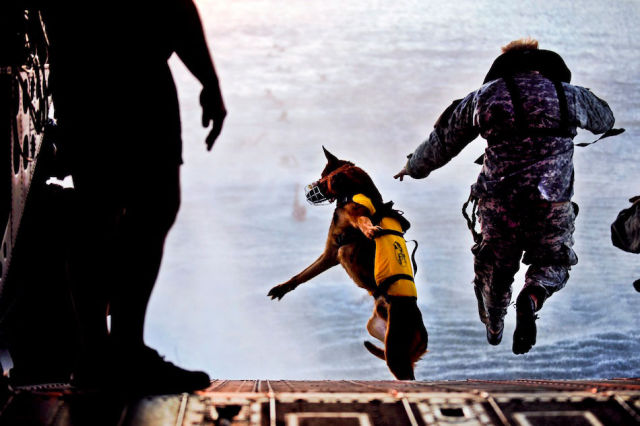 Phenomenal Action Photos of Life in the Military