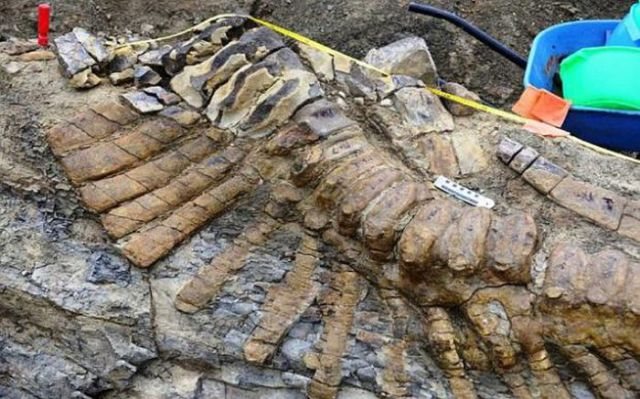 Amazing Discovery of Fossilised Dinosaur Bones