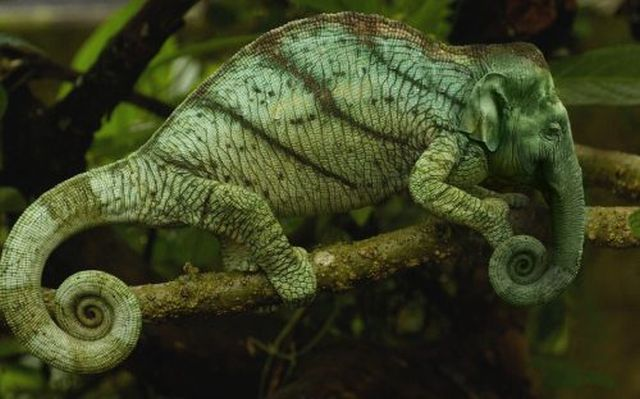 These Bizarre Hybrid Animals Really Freak Me Out