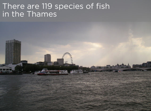 A Fascinating History Lesson on the River Thames