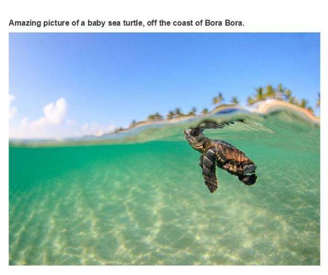 Fascinating, Informative and Fun Photos