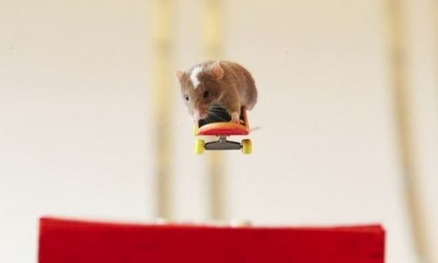Teaching Mice to Skateboard