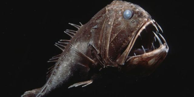 Cool and creepy animal pictures 63 pics - Poisson moche ...