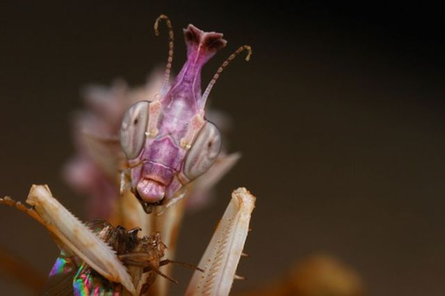 Cool and Creepy Animal Pictures
