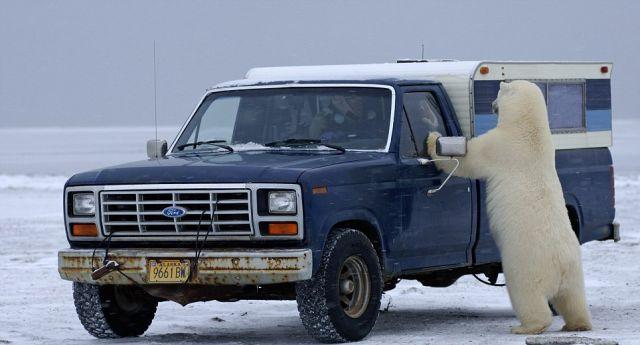 Unexpected Encounter in Alaska