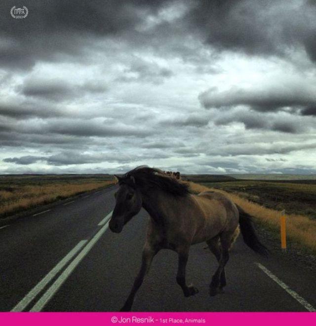 Incredible Award-Winning iPhone Photos