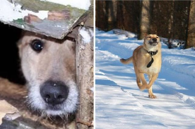 Abandoned Dogs Who Were Rescued: Then and Now
