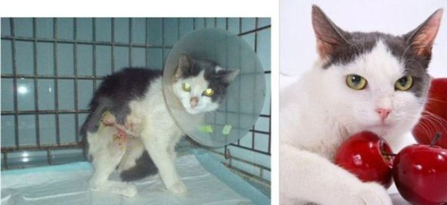 Rescued Cats: Before and After Photos
