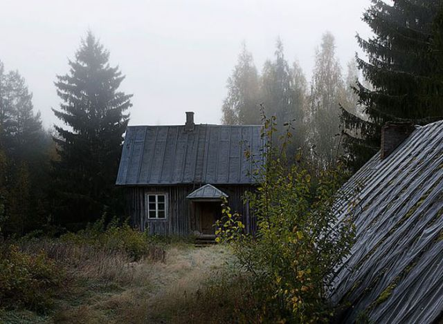 Finnish Woodland Houses Inhabited by Animals