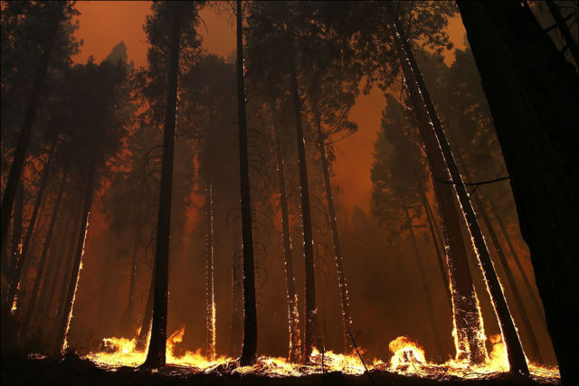 Enormous Forest Fires Devastate Yosemite National Park