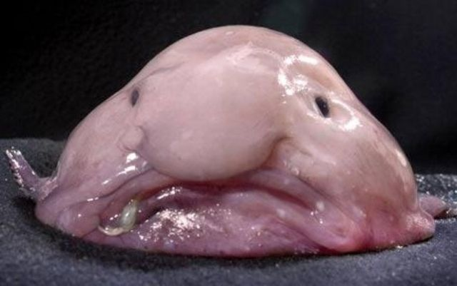 Real-Life Bizarre Creatures That Really Exist