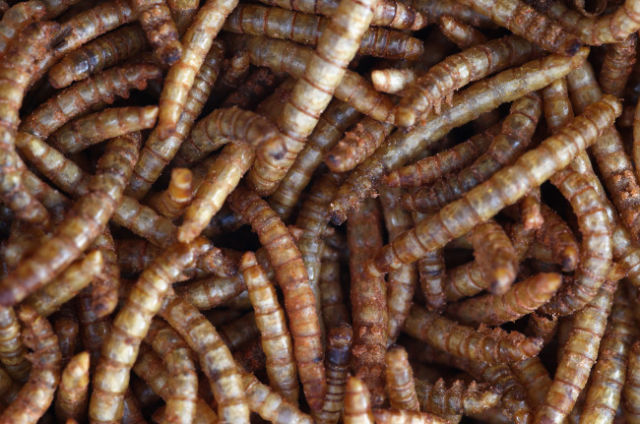 """Rentokil Celebrates 85 Years in Business with a """"Creepy-Crawly"""" Lunch"""