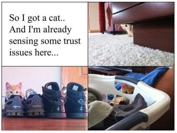 Things All Cat Owners Will Relate To