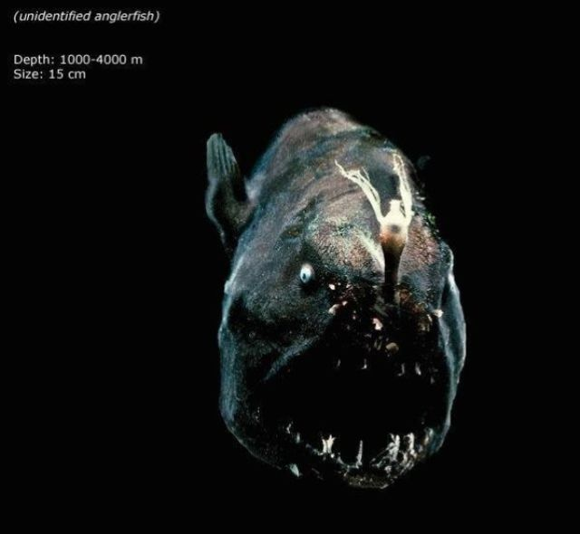 Unusual and Terrifying Animals from the Deepest Ocean Depths